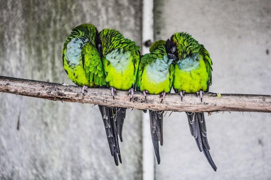 CuddlingBirds16