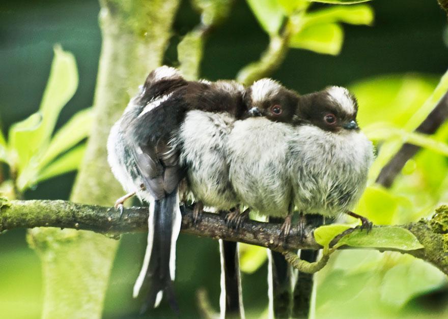 CuddlingBirds25