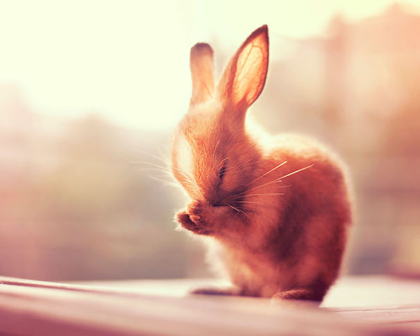 XX-Cutest-Bunnies1__605