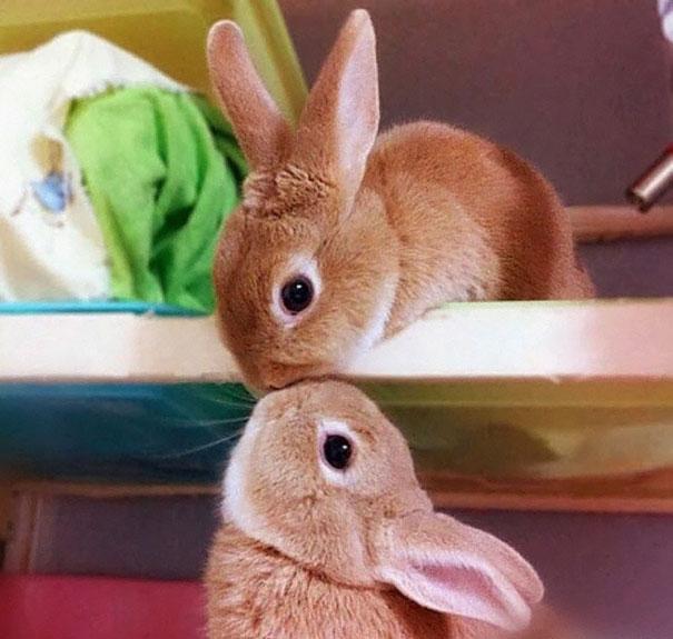 cute-bunnies-105__605