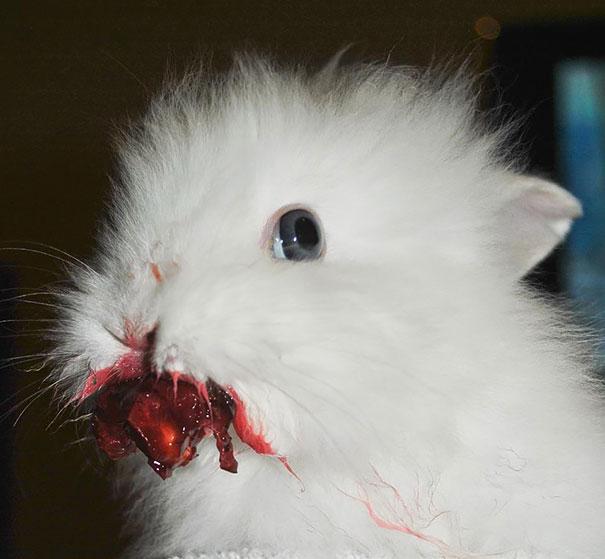 cute-bunnies-115__605