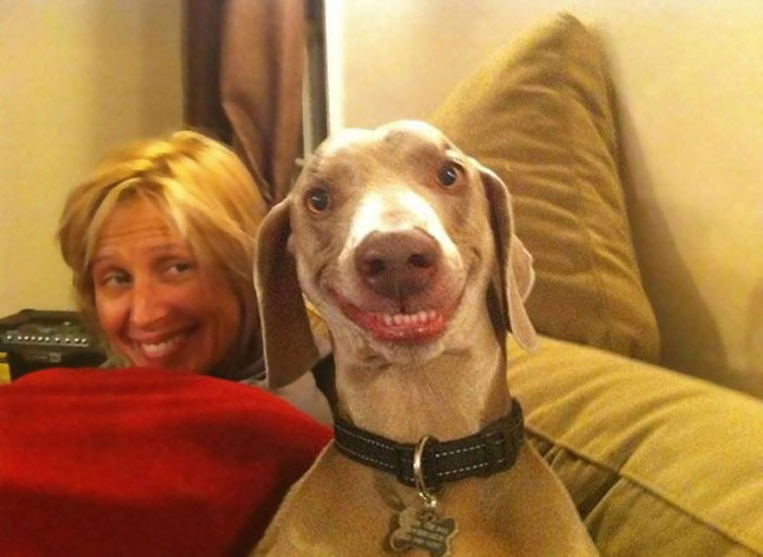 post-the-happiest-dogs-who-show-the-best-smiles-15__700