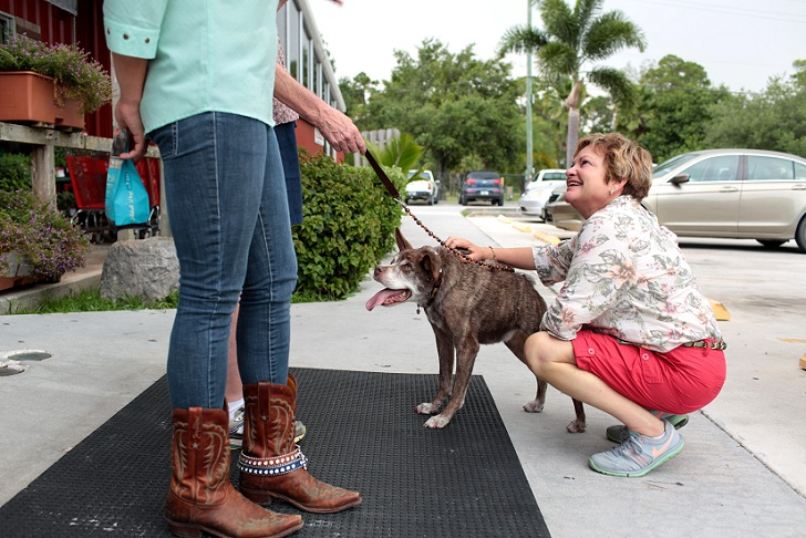 Hunchback dog Quasi Modo wins 'world's ugliest dog' competition, Loxahatchee, Florida, America - 06 Jul 2015