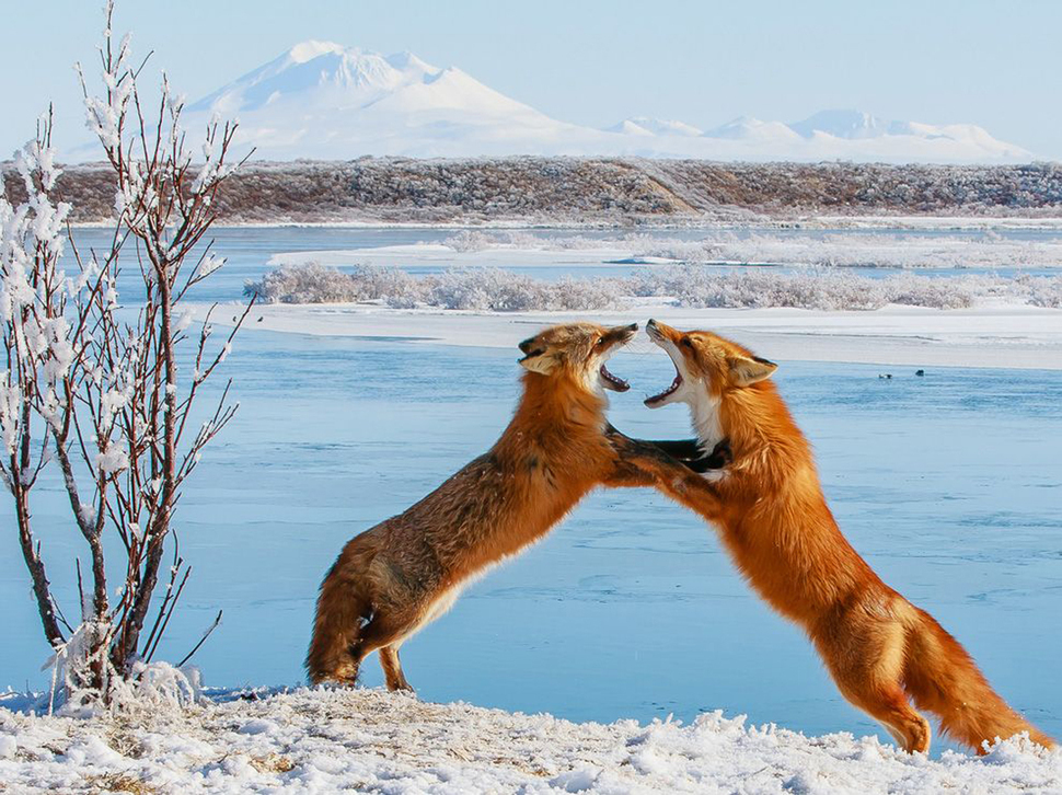 Beautiful-and-funny-photos-of-wildlife-13