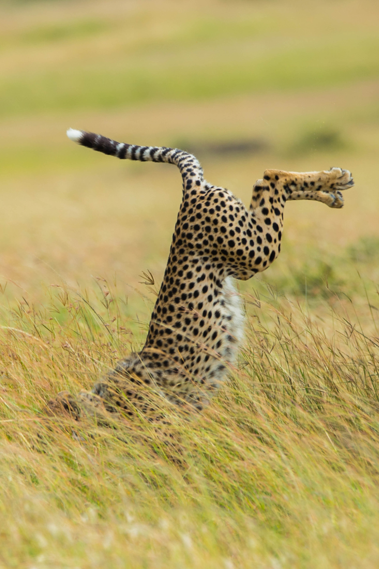 Comedy-Wildlife-Photography-Awards-2015_11