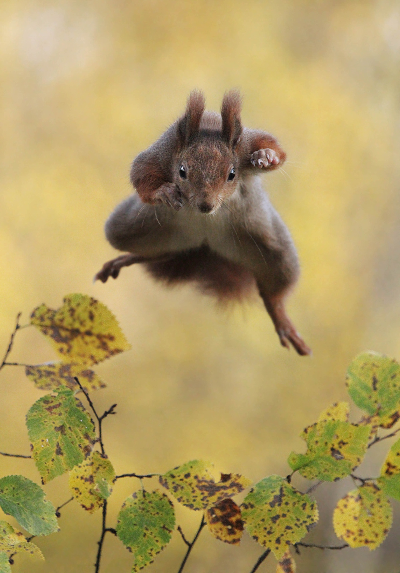 Comedy-Wildlife-Photography-Awards-2015_15