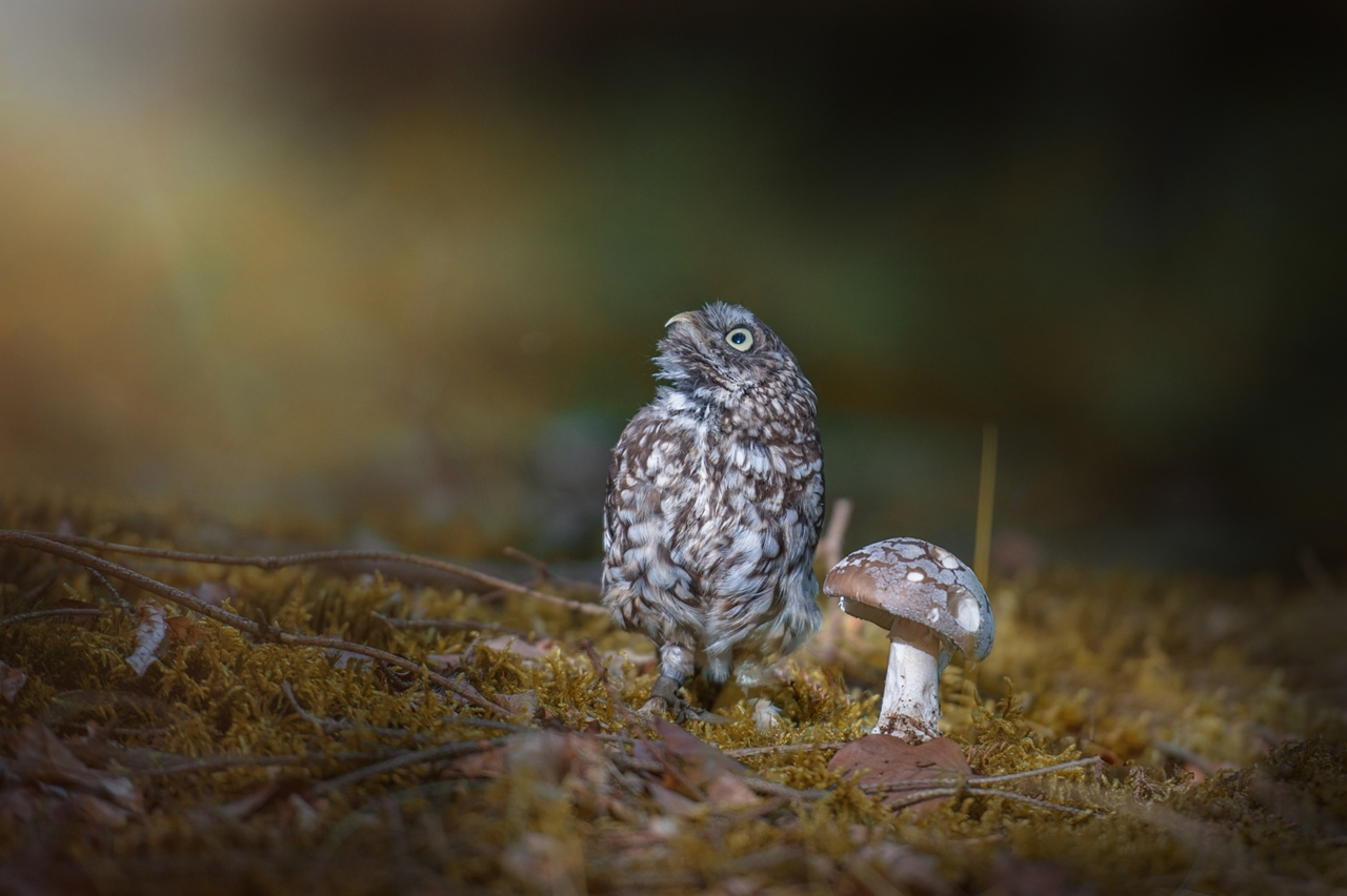 Cute-Tiny-Owl-04
