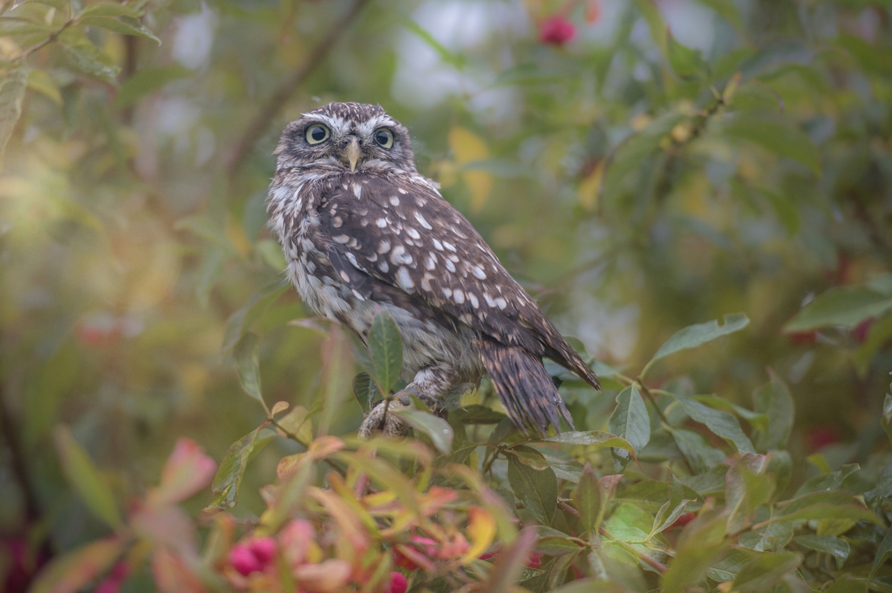 Cute-Tiny-Owl-06