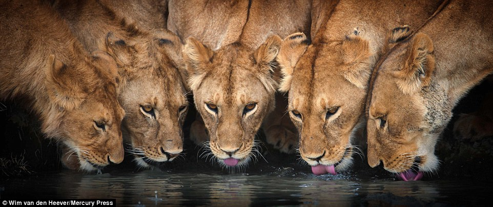 animal-kingdom_14