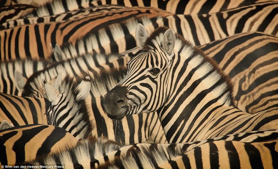 animal-kingdom_15