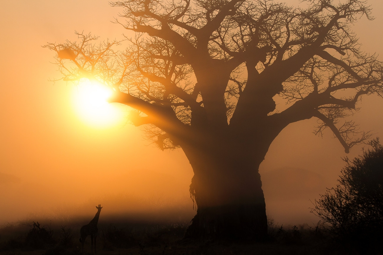 2015-Africa-Geographic-Photographer-of-the-Year-Award-15