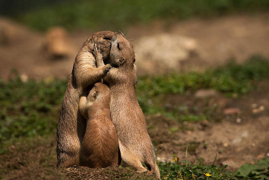 animal-family-portraits-7__880