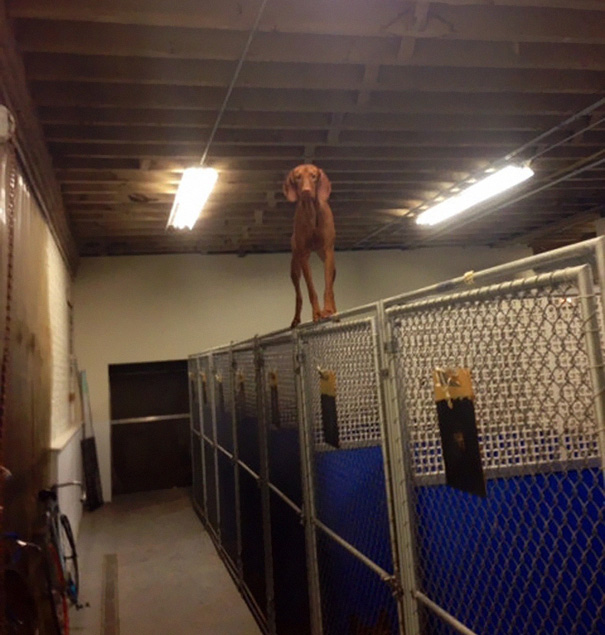 dogs-who-made-poor-life-choices-18__605