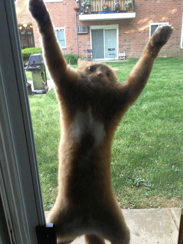 funny-cat-fails-21__605