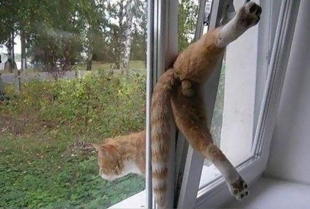 funny-cat-fails-31__605