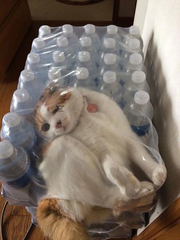 funny-cat-fails-32__605