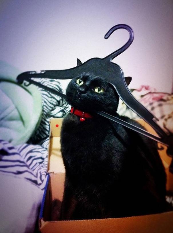 funny-cat-fails-36__605
