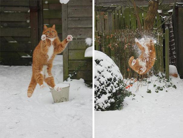 funny-cat-fails-40__605