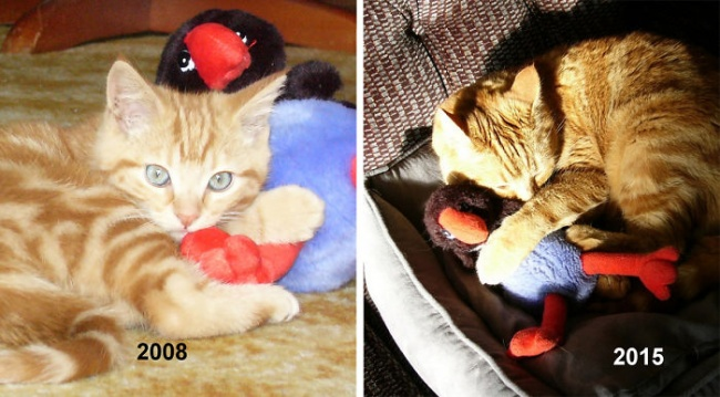 5277810-650-1450338081-cat-toy-before-after__700