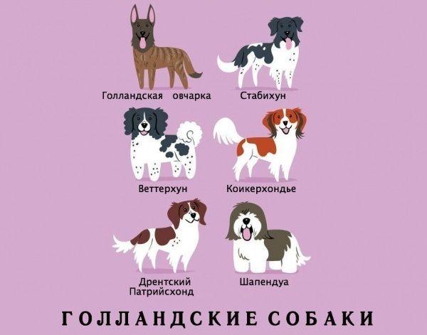 Dog_13