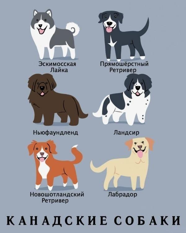 Dog_5