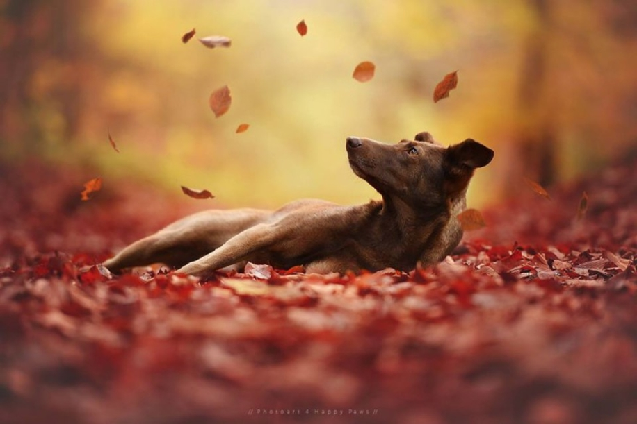 Woman-Creates-Enchanting-Portraits-of-Dogs-in-the-Austrian-Wilderness__11