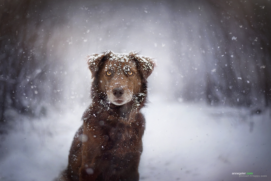 Woman-Creates-Enchanting-Portraits-of-Dogs-in-the-Austrian-Wilderness__14
