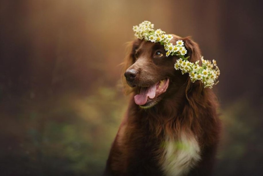 Woman-Creates-Enchanting-Portraits-of-Dogs-in-the-Austrian-Wilderness__15