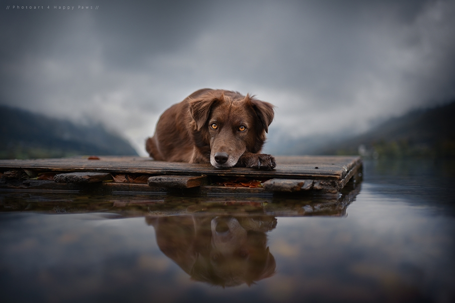 Woman-Creates-Enchanting-Portraits-of-Dogs-in-the-Austrian-Wilderness__19
