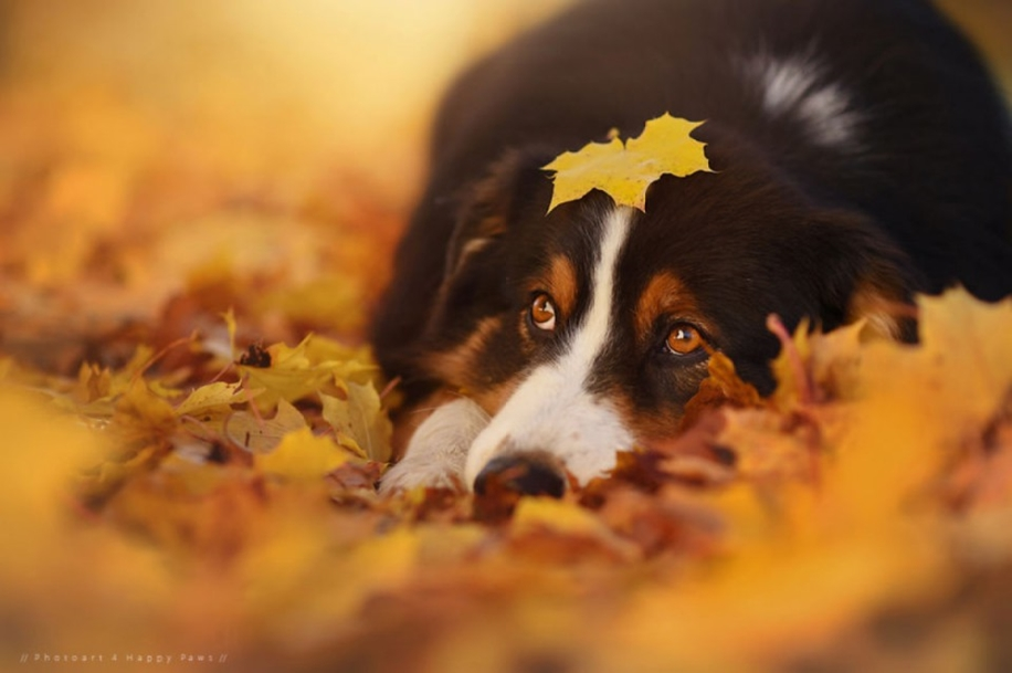 Woman-Creates-Enchanting-Portraits-of-Dogs-in-the-Austrian-Wilderness__20