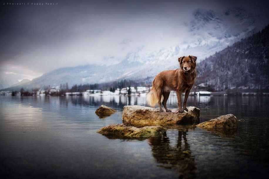 Woman-Creates-Enchanting-Portraits-of-Dogs-in-the-Austrian-Wilderness__9