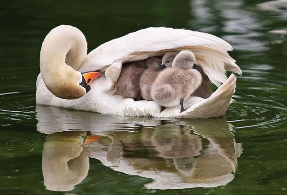 Pictures-of-birds-who-care-about-their-kids-01
