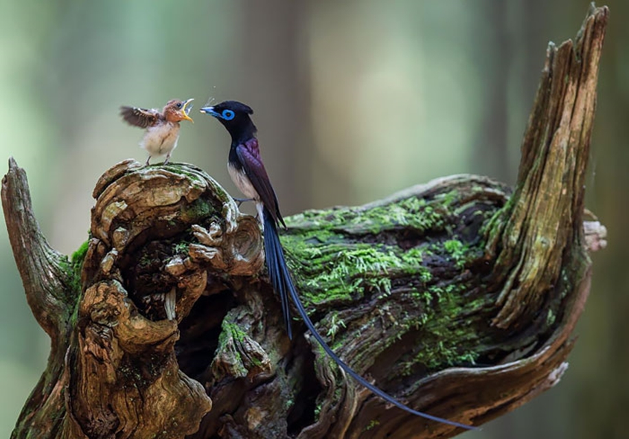 Pictures-of-birds-who-care-about-their-kids-02