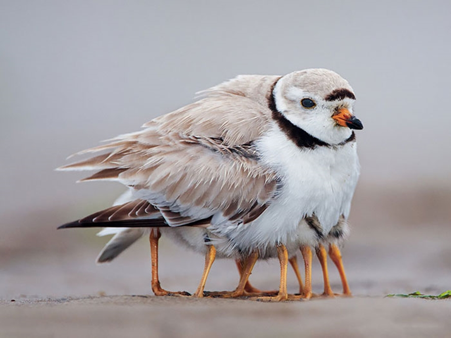 Pictures-of-birds-who-care-about-their-kids-04
