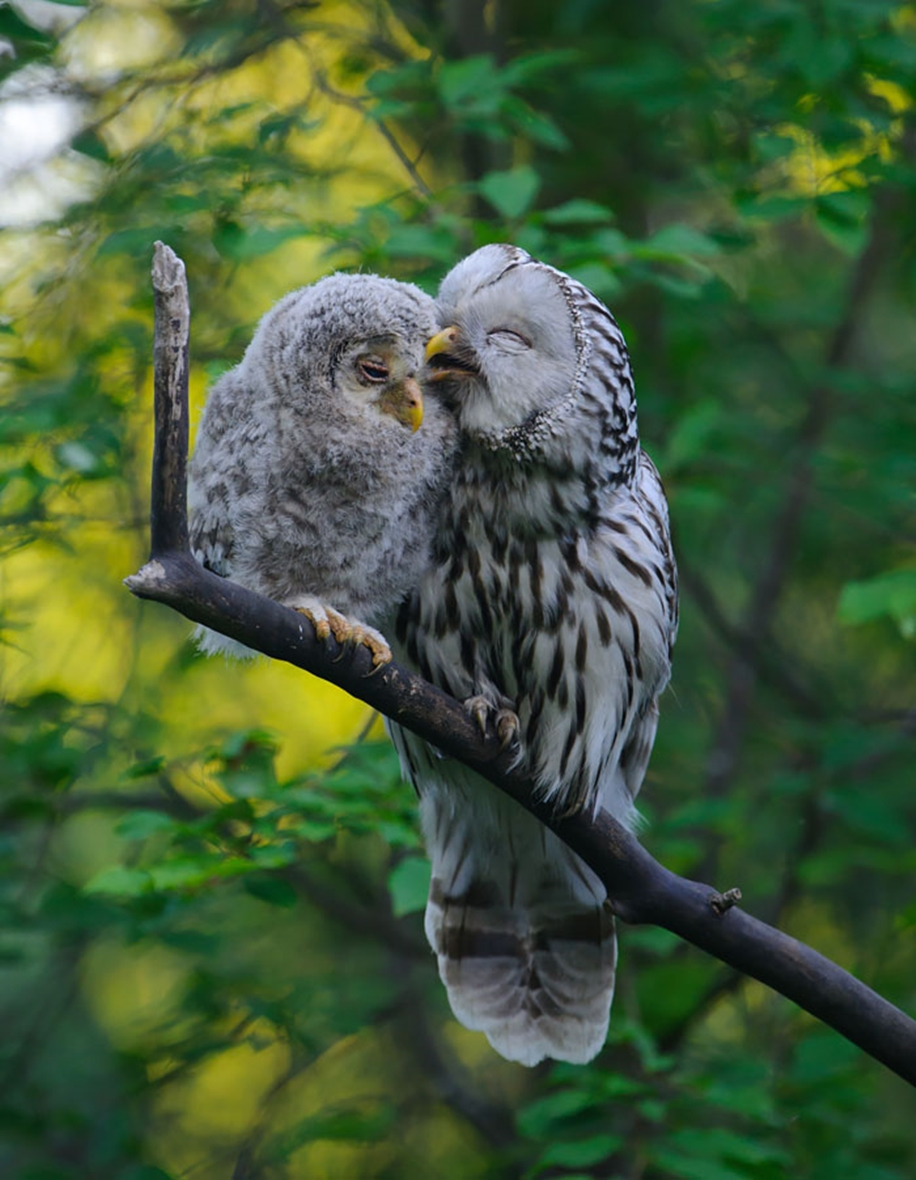 Pictures-of-birds-who-care-about-their-kids-06