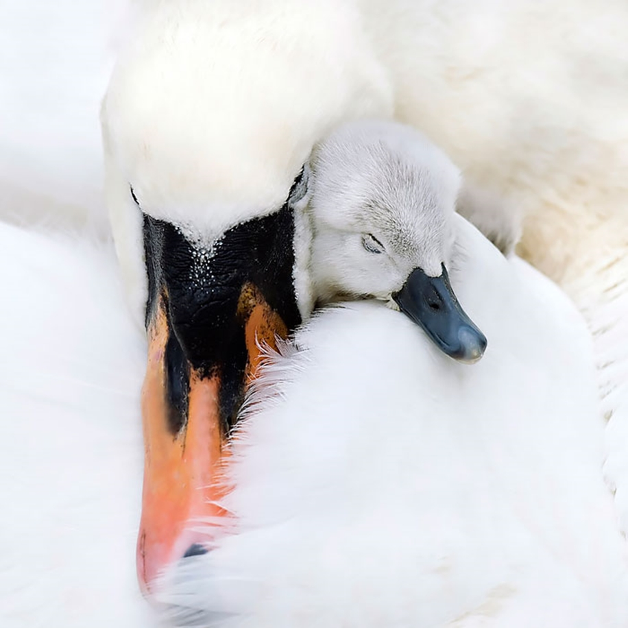 Pictures-of-birds-who-care-about-their-kids-08