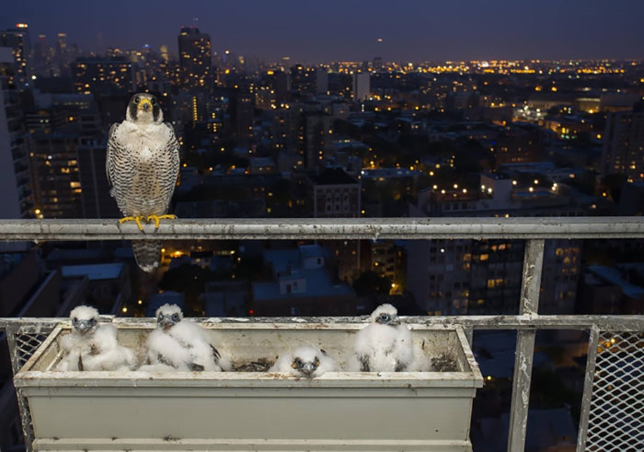 Pictures-of-birds-who-care-about-their-kids-10