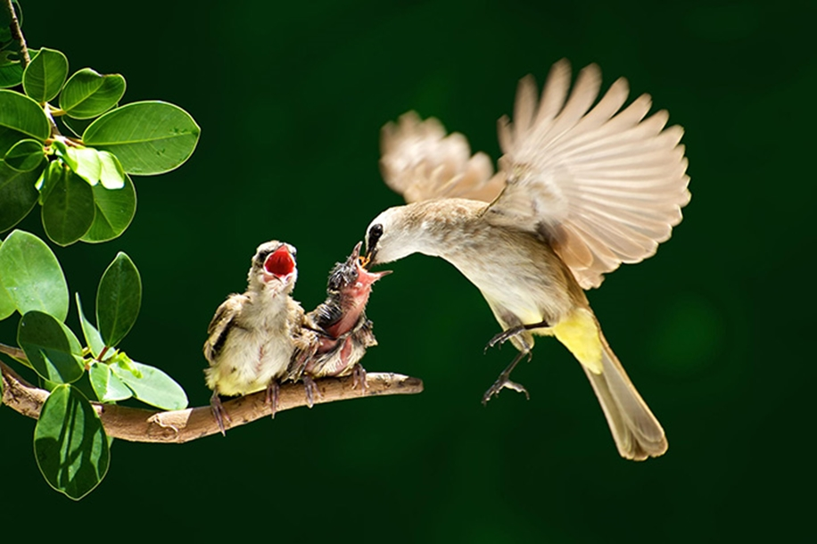 Pictures-of-birds-who-care-about-their-kids-11