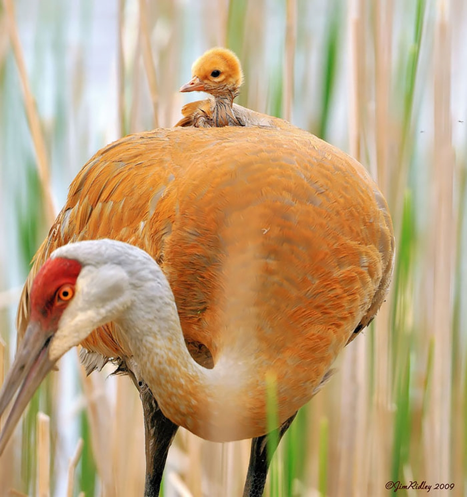 Pictures-of-birds-who-care-about-their-kids-15