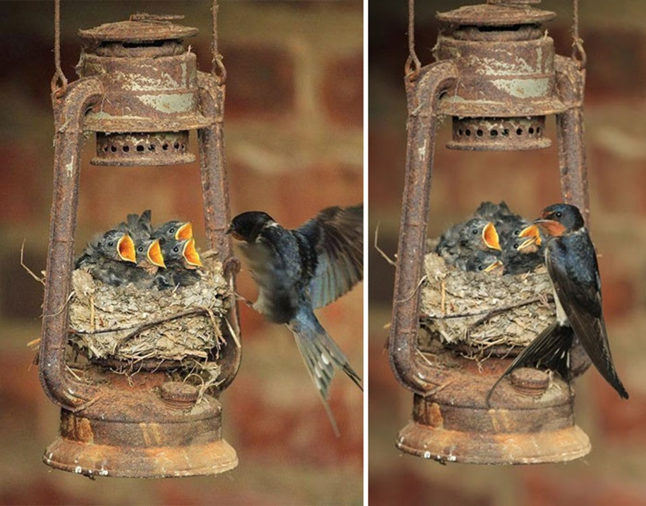 Pictures-of-birds-who-care-about-their-kids-17