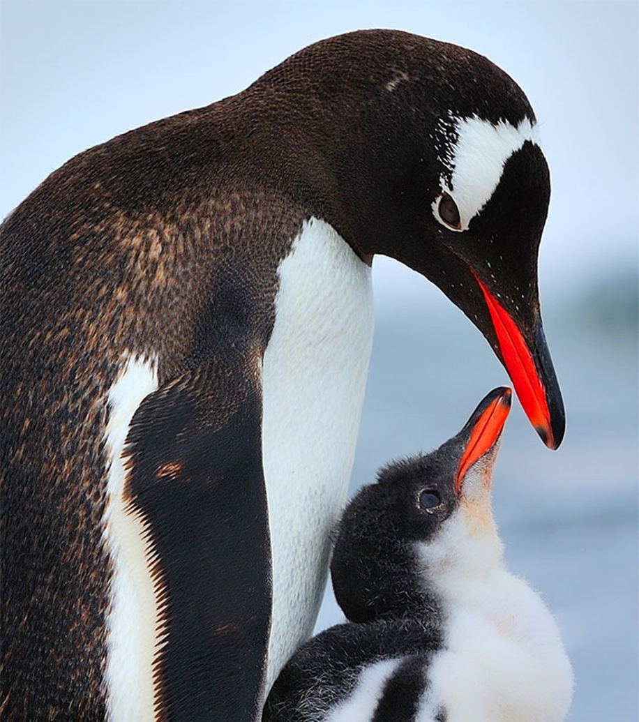 Pictures-of-birds-who-care-about-their-kids-20