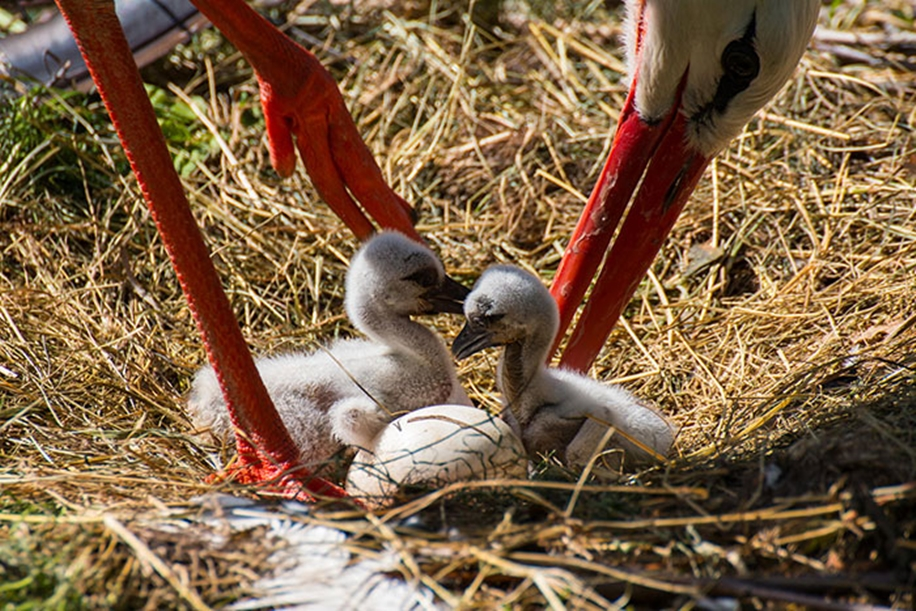 Pictures-of-birds-who-care-about-their-kids-22