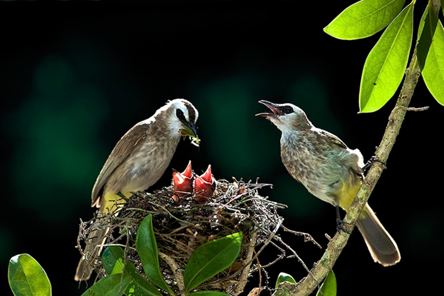 Pictures-of-birds-who-care-about-their-kids-26