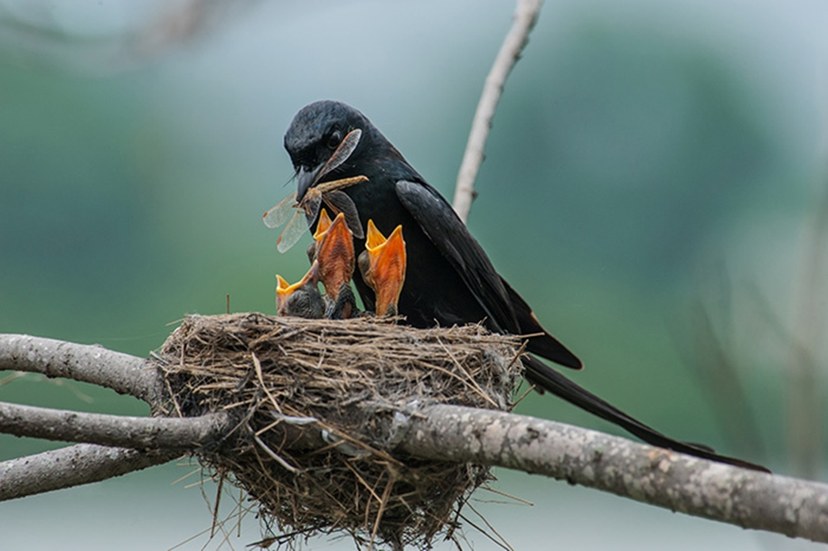 Pictures-of-birds-who-care-about-their-kids-27