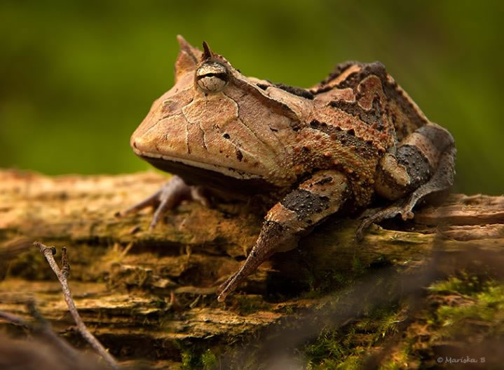 Weird-Nature-Photos-The-Strangest-Frogs-On-The-Planet-5