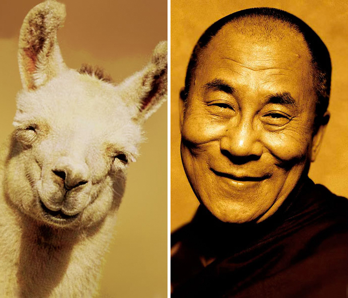 celebrity-look-alikes-animals-72__700