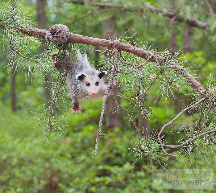cute-possums-10-11