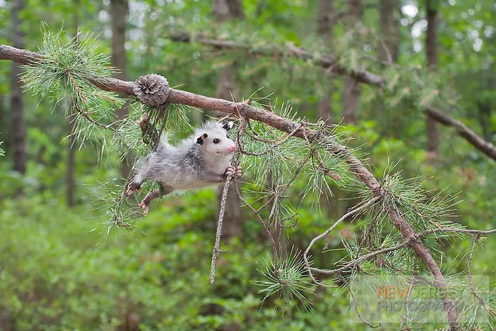 cute-possums-10-31
