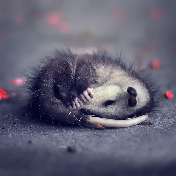 cute-possums-22__700
