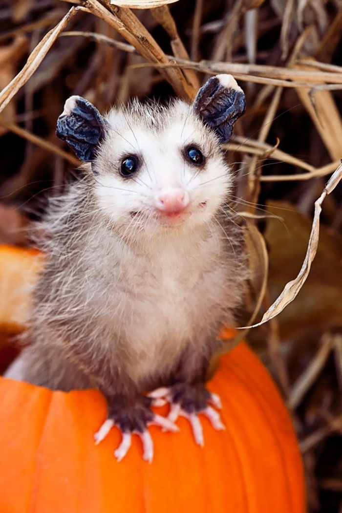 cute-possums-31__700
